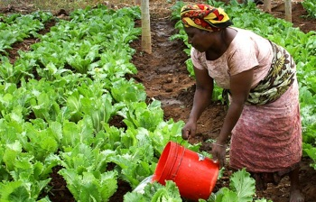 Sterling Bank partners StearsData to publish Agric Industry Report 2021